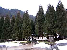 HARIMAYA03